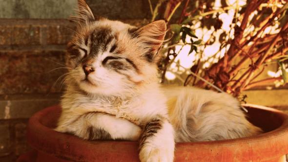 4 Penyebab Bulu Kucing Rontok